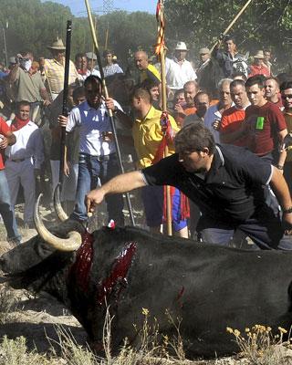 platanito, el toro de la vega