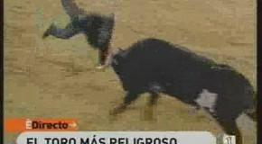 Los toros temen la llegada del verano…menos Ratón