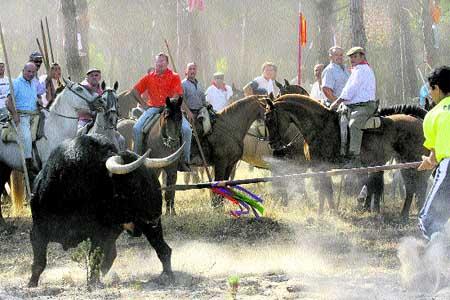 el toro de la vega